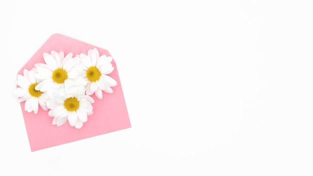 Bovenaanzicht van daisy met kopie ruimte