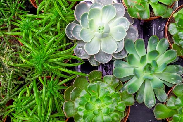 Bovenaanzicht van de close-up van verschillende vetplanten in een kas. selectieve aandacht.