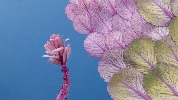 Bovenaanzicht van de lente plant en bladeren