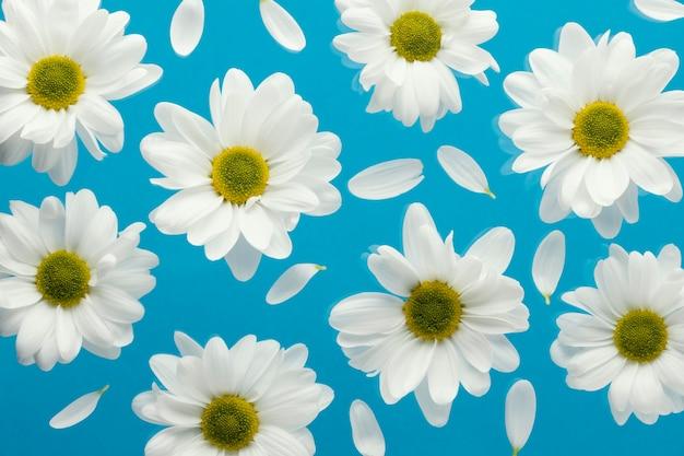 Bovenaanzicht van de lentemadeliefjes met bloemblaadjes