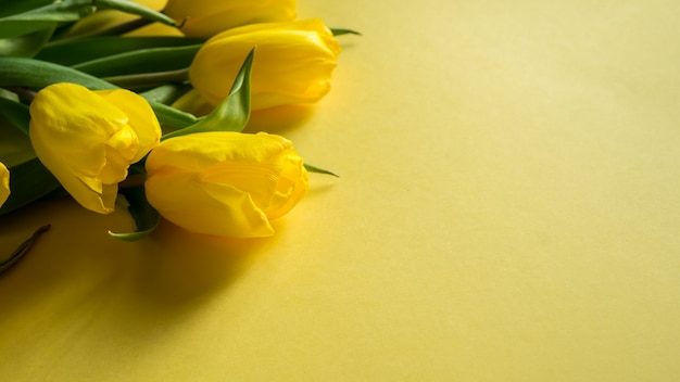 Bovenaanzicht van de lentetulpen op kleurrijke gele panoramische opname als achtergrond