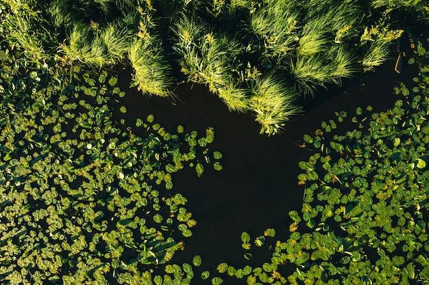 Bovenaanzicht van de rivier de svisloch in het loshitsa park van de stad met lelies bij zonsondergang. prachtige natuur van wit-rusland.