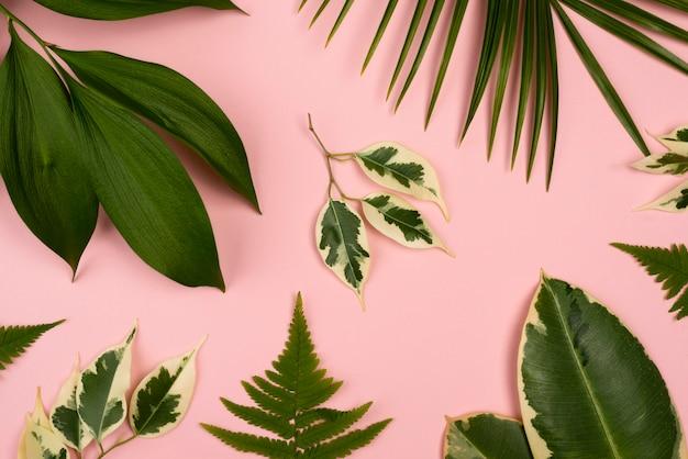 Bovenaanzicht van de selectie van bladeren van de plant