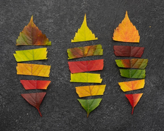 Bovenaanzicht van de selectie van herfstbladeren in stukjes
