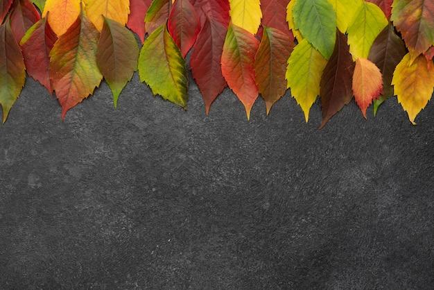Bovenaanzicht van de selectie van herfstbladeren met kopie ruimte