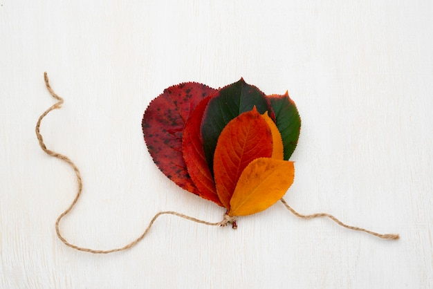 Bovenaanzicht van de selectie van herfstbladeren vastgebonden met een touwtje