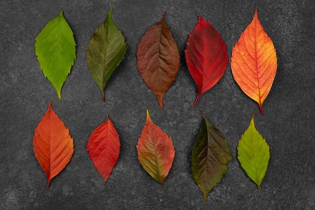 Bovenaanzicht van de selectie van herfstbladeren