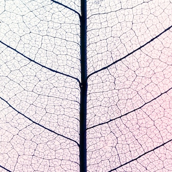 Bovenaanzicht van doorschijnende bladeren textuur
