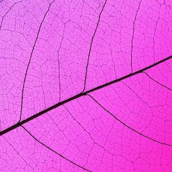 Bovenaanzicht van doorschijnende bladtextuur met gekleurde tint