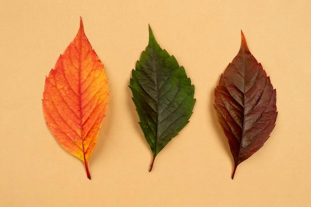 Bovenaanzicht van drie gekleurde bladeren