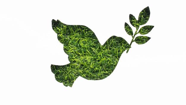 Bovenaanzicht van duif met gras