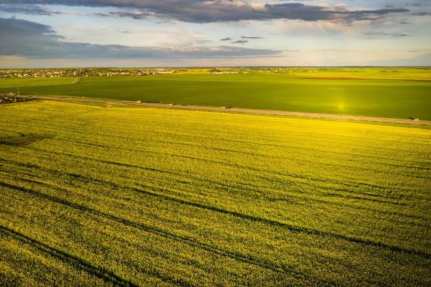 Bovenaanzicht van een geel koolzaadveld na regen in wit-rusland, een landbouwgebied. het concept van ontwikkeling van de landbouwsector