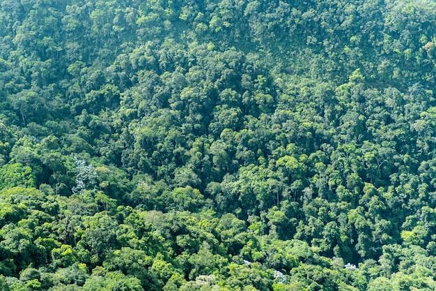 Bovenaanzicht van een groot bos in brazilië. textuur van verschillende bomen.