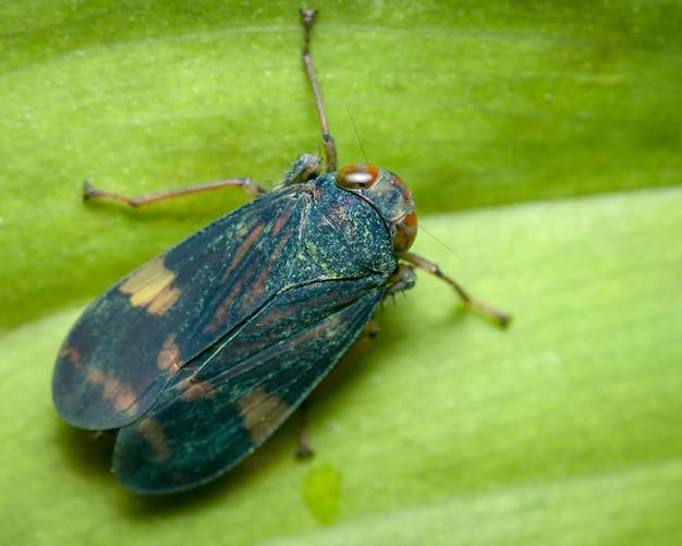 Bovenaanzicht van een klein insect op een blad