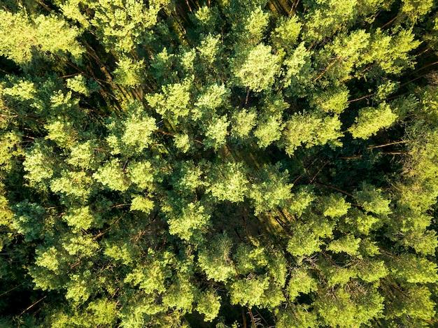 Bovenaanzicht van een loofbos van de zomer op een heldere zomerdag. luchtfoto met dron zoals gebladerte natuurlijke achtergrond Premium Foto