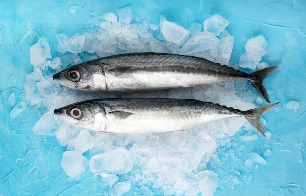 Bovenaanzicht van een paar vissen met ijs