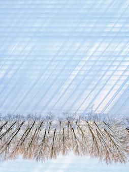 Bovenaanzicht van een rechte lijn van kale bomen met lange schaduwen langs een besneeuwd veld