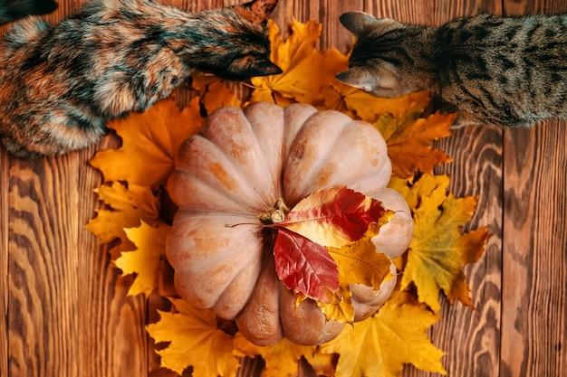 Bovenaanzicht van een rijpe ronde grote pompoen met rode en gele herfstbladeren