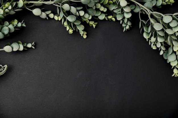 Bovenaanzicht van eucalyptustak op een zwarte achtergrond