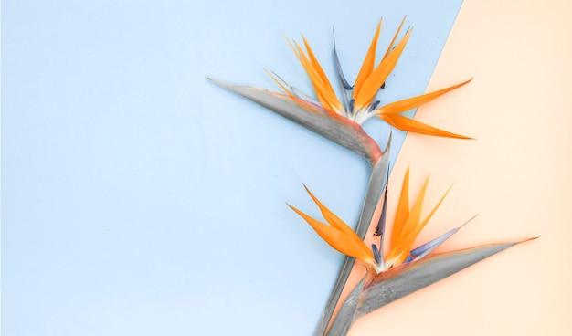 Bovenaanzicht van flatlay, oranje strelizia op gekleurd papier.