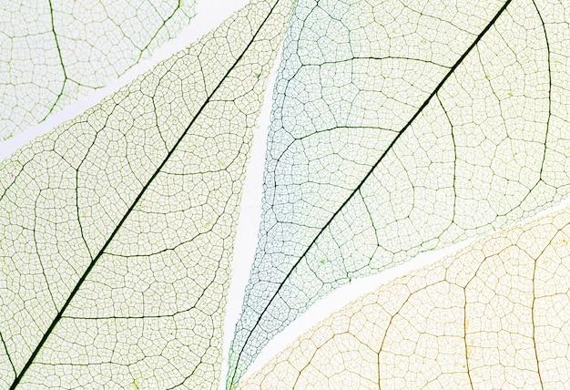 Bovenaanzicht van gekleurd transparant blad