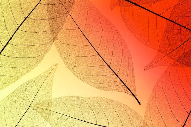 Bovenaanzicht van gekleurde bladeren met transparante textuur