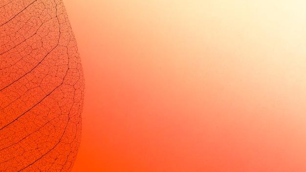 Bovenaanzicht van gekleurde doorschijnende bladlamina textuur