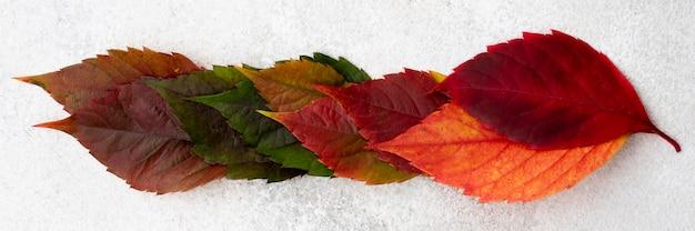 Bovenaanzicht van gekleurde herfstbladeren