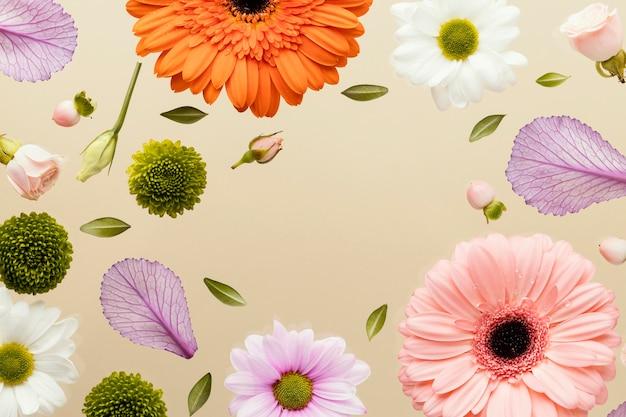 Bovenaanzicht van gerbera lentebloemen met madeliefjes en bladeren