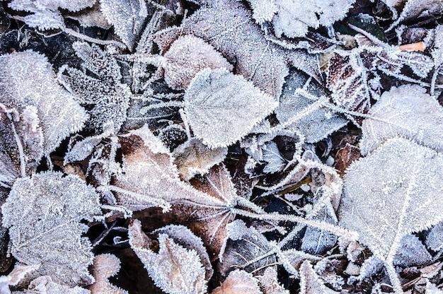 Bovenaanzicht van gevallen herfstbladeren bedekt met ijskristallen close-up