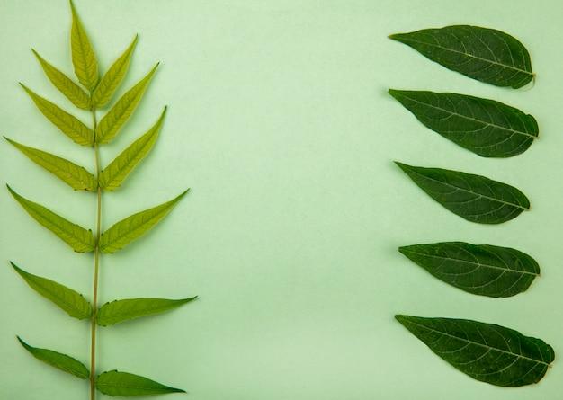 Bovenaanzicht van groen blad op groene ondergrond