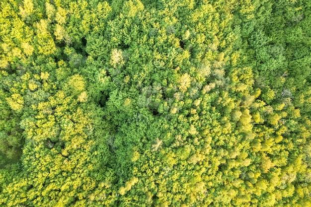 Bovenaanzicht van groen bos op zonnige lente of zomer dag