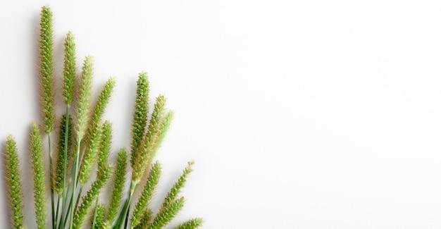 Bovenaanzicht van groene aartjes op wit met kopie ruimte.