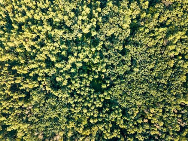 Bovenaanzicht van groene bomen op een zonnige dag. loofbos als achtergrond voor de lay-out. luchtfoto van de drone. milieubehoud concept