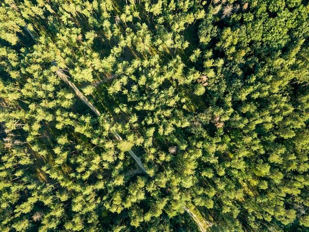 Bovenaanzicht van groene bomen op een zonnige dag. loofbos als achtergrond voor de lay-out. luchtfoto van de drone