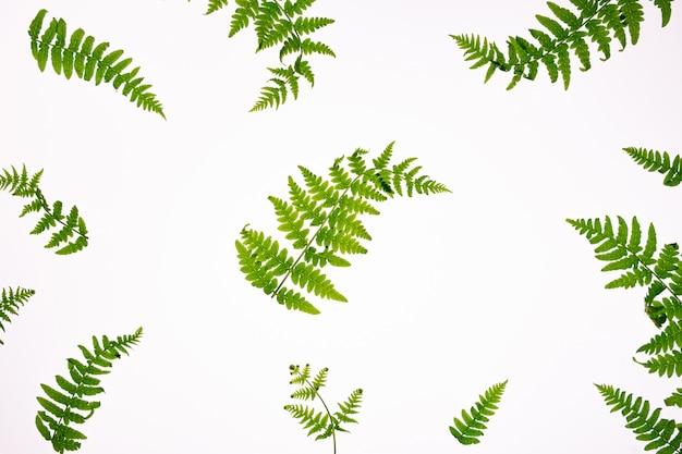 Bovenaanzicht van groene tropische varenbladeren geïsoleerd op een witte achtergrond. minimaal zomerconcept met varenblad. plat liggen