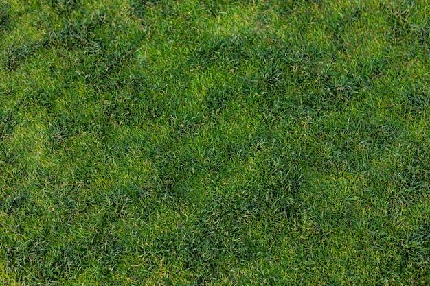Bovenaanzicht van helder groen gras textuur oppervlak