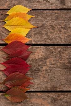 Bovenaanzicht van herfst gekleurde bladeren met kopie ruimte