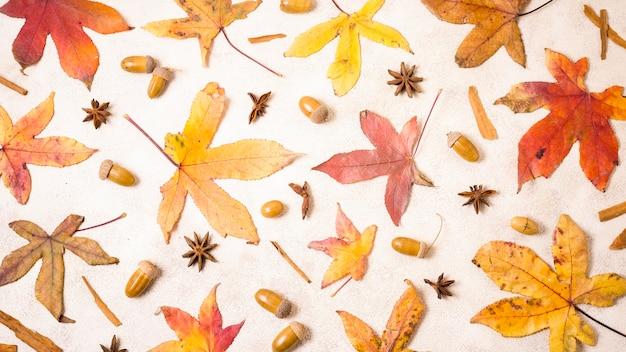 Bovenaanzicht van herfstbladeren met eikels