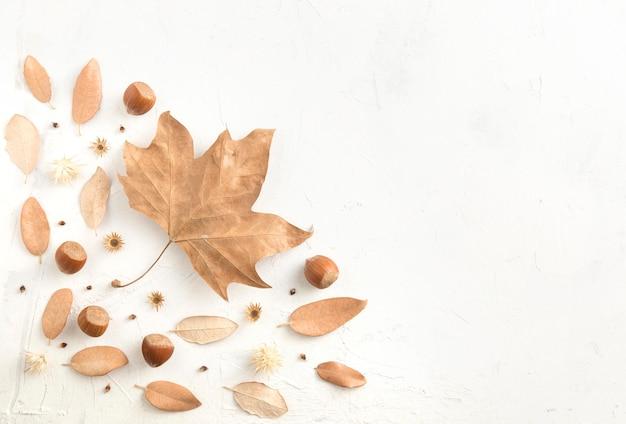 Bovenaanzicht van herfstbladeren met kopie ruimte en kastanjes