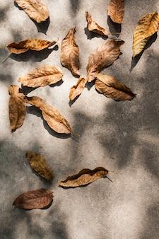 Bovenaanzicht van herfstbladeren met schaduwen op beton. herfst concept