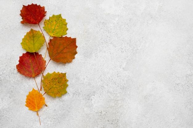 Bovenaanzicht van het assortiment van herfstbladeren met kopie ruimte