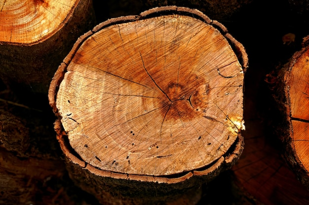 Bovenaanzicht van houtstronken gesneden met kettingzaag