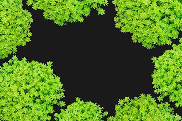 Bovenaanzicht van kleine groene plant geïsoleerd op zwarte achtergrond.