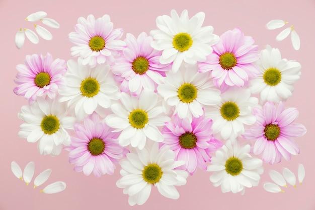 Bovenaanzicht van kleurrijke lente madeliefjes