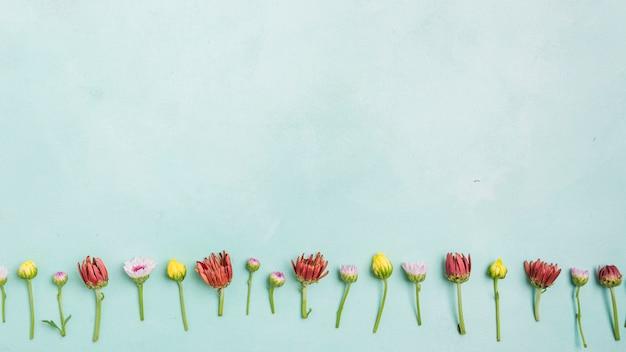 Bovenaanzicht van lente madeliefjes en rozen met kopie ruimte