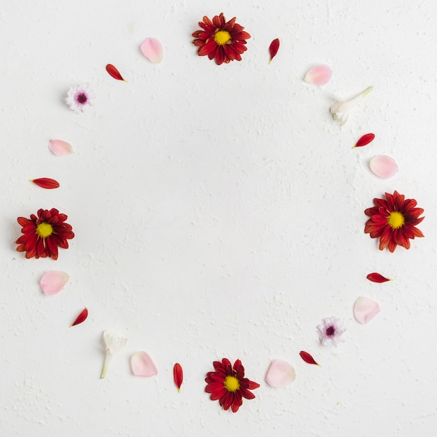 Bovenaanzicht van lente madeliefjes met assortiment van bloemblaadjes