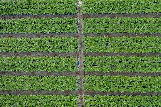Bovenaanzicht van levendige groene tuin in parallelle lijnen