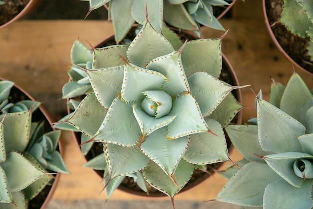 Bovenaanzicht van lichtgroene vetplanten in potten die op houten oppervlak staan