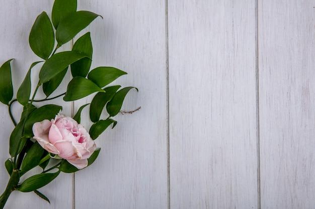 Bovenaanzicht van lichtroze roos met een tak van bladeren op een grijze ondergrond
